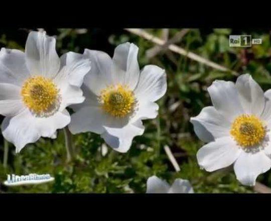 Rai Uno Linea Bianca - Roccaraso (puntata integrale)